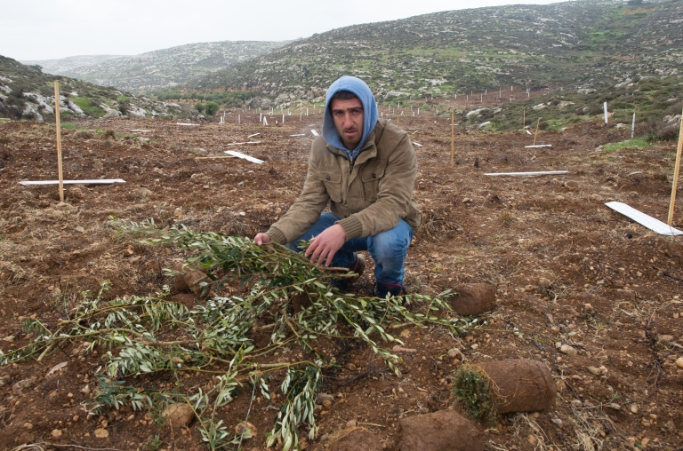 Muhannad with the remains of 400 uprooted trees by settlers living near the farmland.